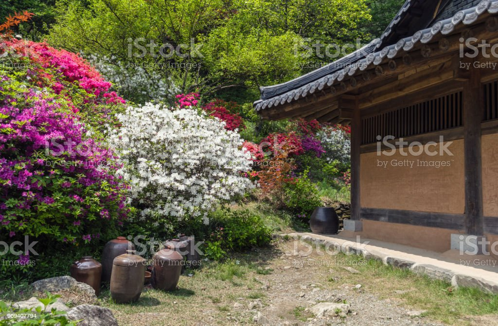 Traditional Korean House With Garden At Springtime Royalty Free Stock Photo