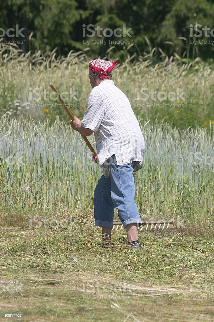 Traditional making hay royalty-free stock photo
