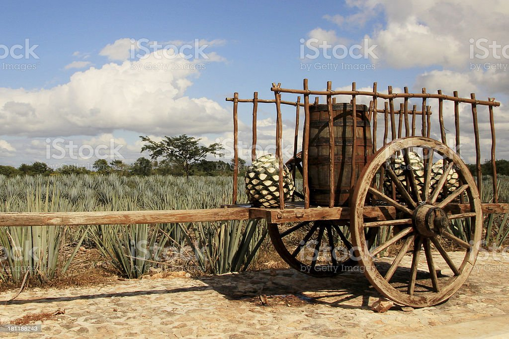 Traditional mexican trailer in front of blue agave plantation stock photo