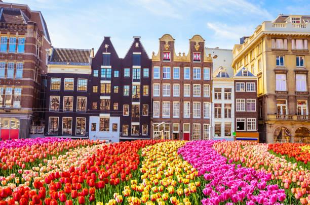 전통적인 오래 된 건물 그리고 암스테르담, 네덜란드 튤립 - 암스테르담 뉴스 사진 이미지