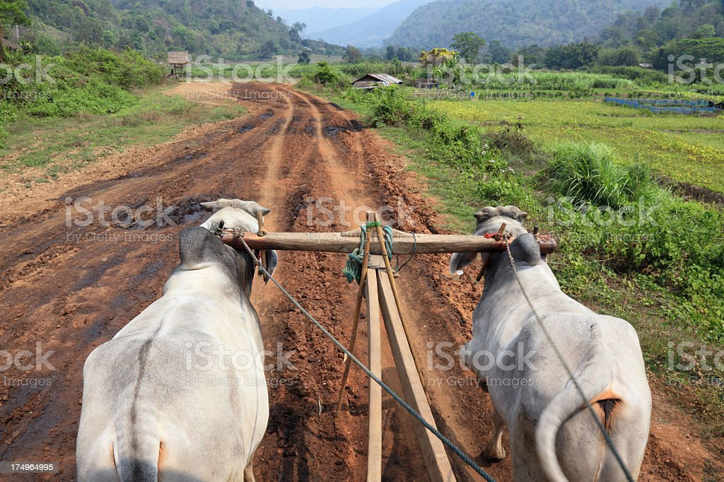Traditional oxcart in Thailand stock photo