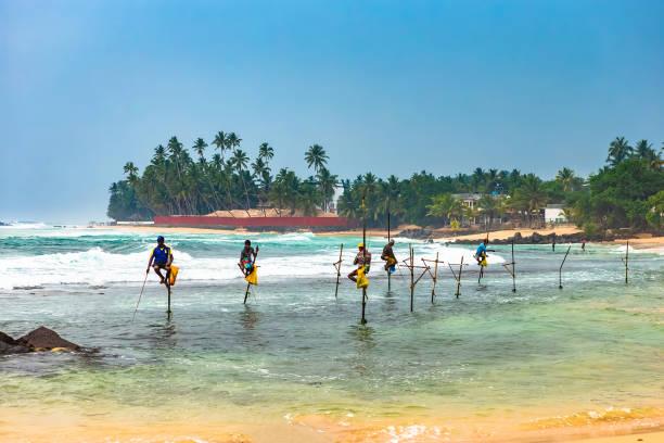 traditional sri lankan stilt fishing. unawartuna sri lanka. - fishman imagens e fotografias de stock