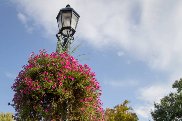 Traditional Street Lamppost With Petunias stock photo