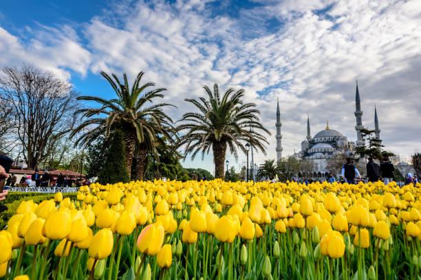 Cтоковое фото Traditional tulip Festival in Sultanahmet Square