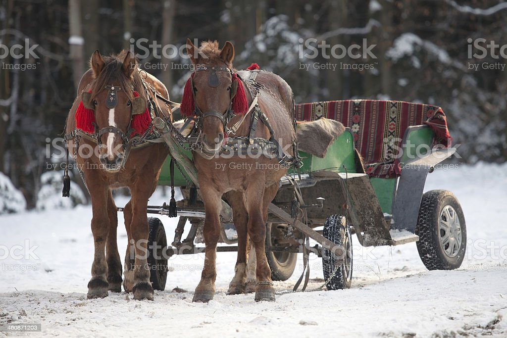 Traditional Ukrainian Christmas Horse Cart Stock Photo Download Image Now Istock