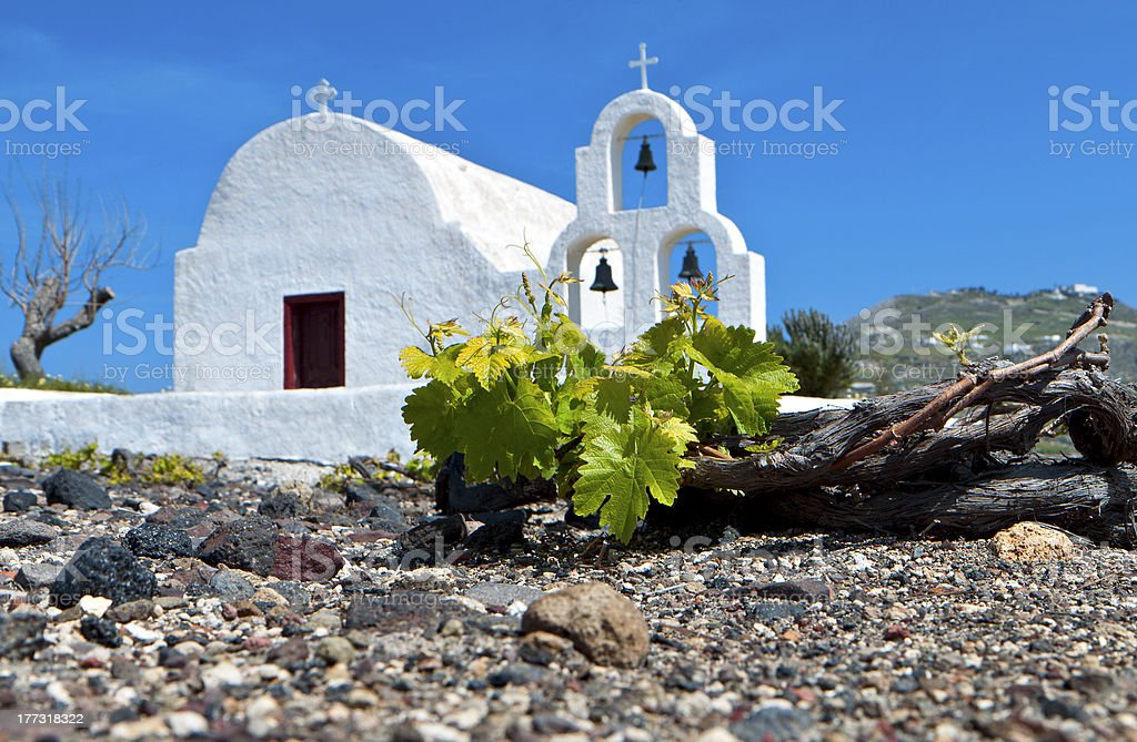 Traditional vineyard at the Cyclades in Greece stock photo
