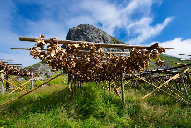 Traditional way of drying stockfish on Lofoten islands in Norway, Hamnoy stock photo