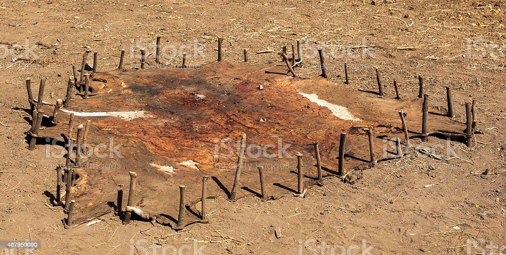 Traditional way of leather treatment. Omorato. Ethiopia. Africa. stock photo