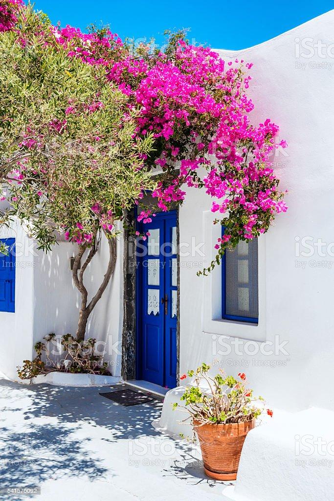 Case Bianche Tradizionali Coperto Con Fiori Di Buganvillea A Santorini,  Grecia Foto Stock Royalty