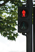 Traffic light for pedestrians with lit Red man - Don't walk sign and maple tree in background. Traffic, prohibition, signs and urbanism concepts