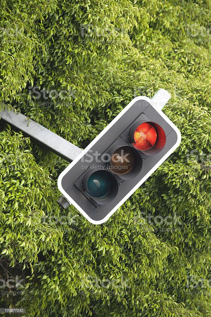 traffic light in tree (red) stock photo
