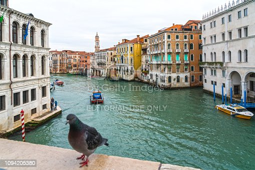 Venice, Italy - February 7, 2018: In front view pigeon on the bridge against Grand Canal and colorful facades looking from Rialto Bridge.