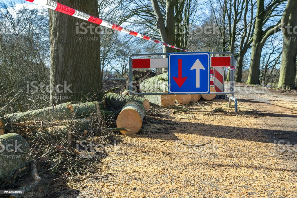 Traffic problems traffic sign storm damage fallen tree stock photo