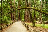 Trail at Big Basin Redwood State Park in California