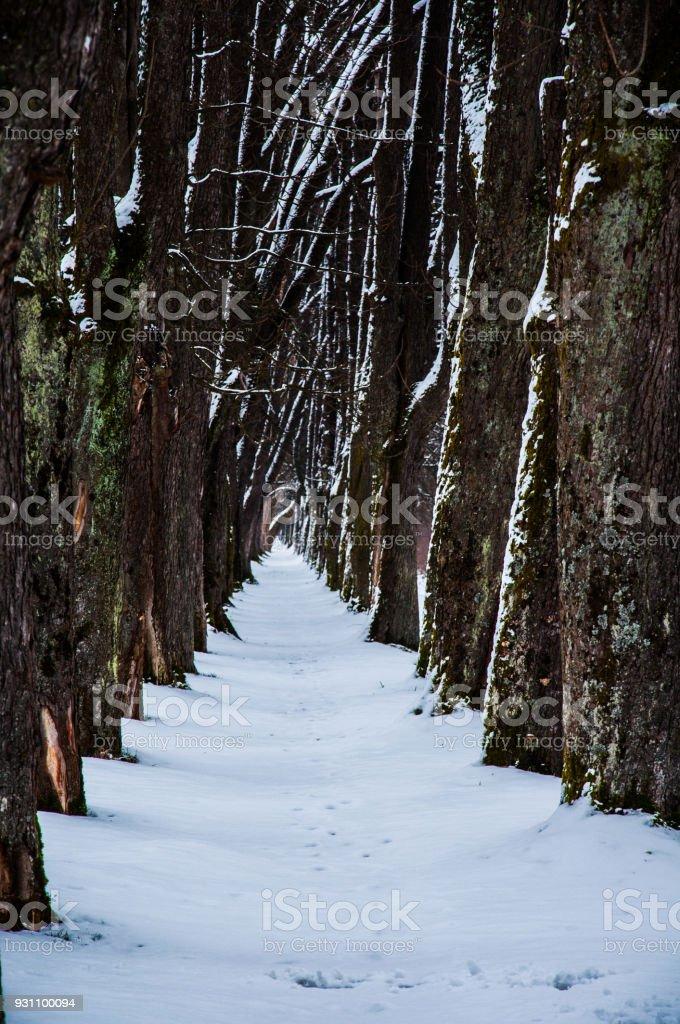 Kar ile kaplı iz - Royalty-free Ara yol Stok görsel