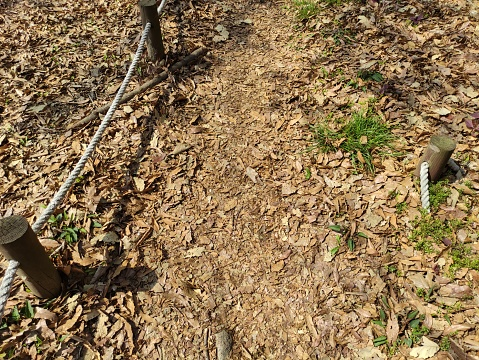 A trail full of fallen leaves