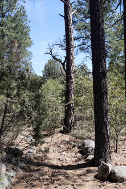 Trail, Gila National Forest – Foto