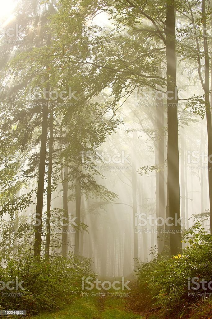 Trail in a mysterious forest royalty-free stock photo