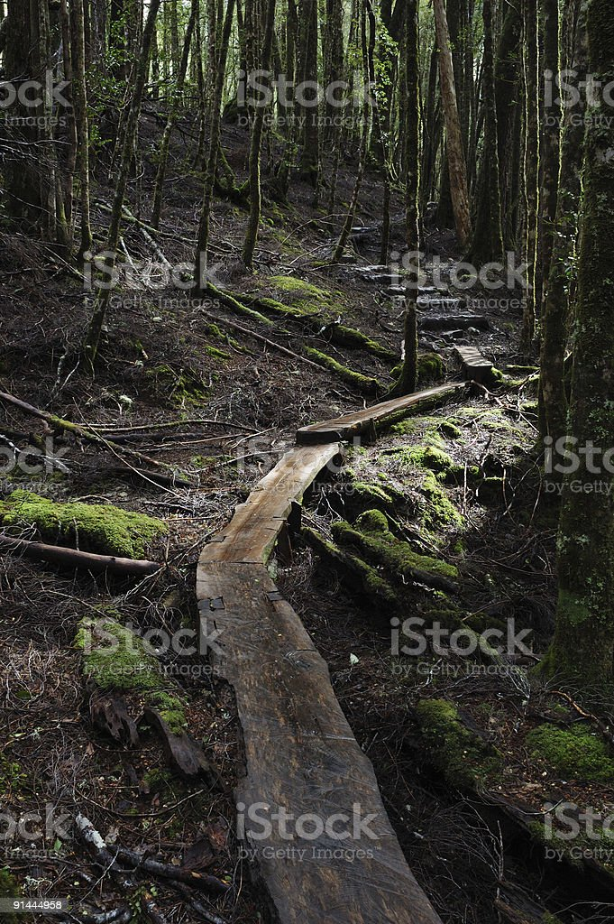 trail in a rain forest royalty-free stock photo
