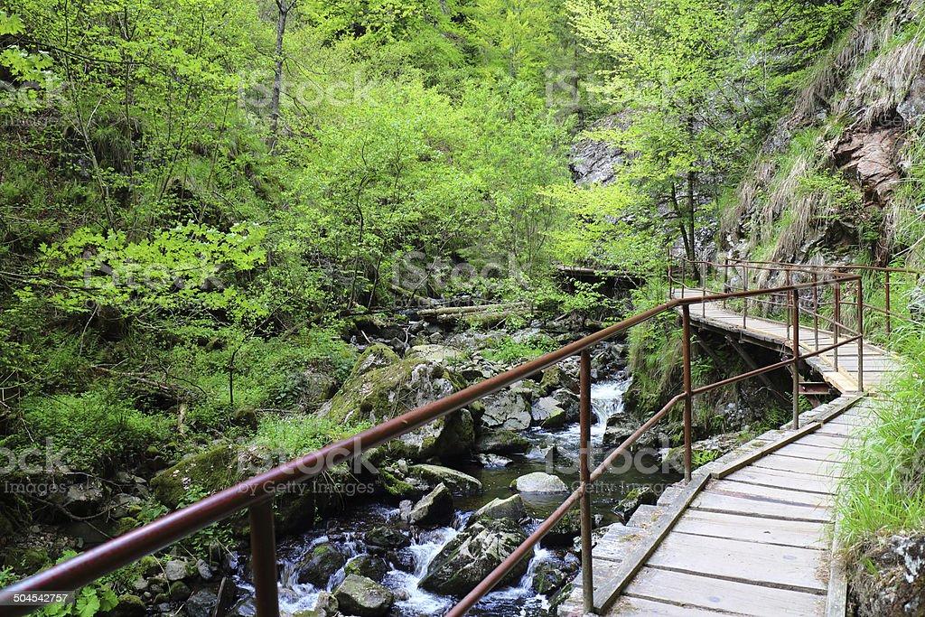 trail im Schwarzwald Ravenna School – Foto