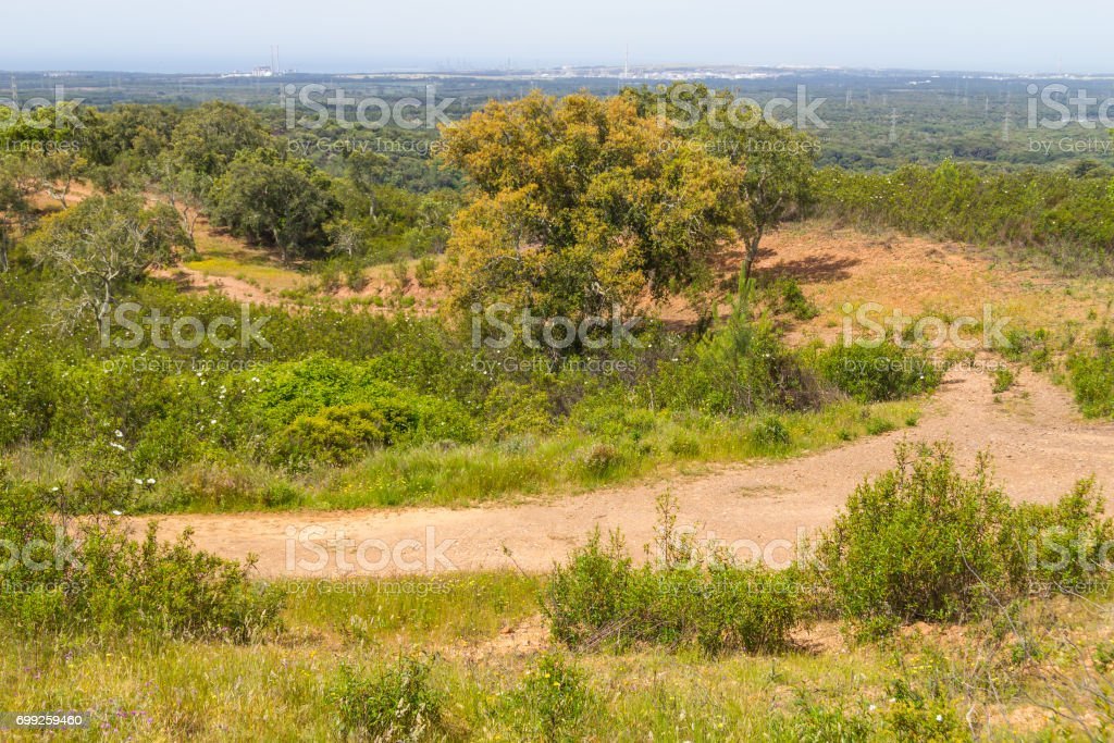 Trail in Cork tree orest and Esteva flowers Santiago do Cacem stock photo