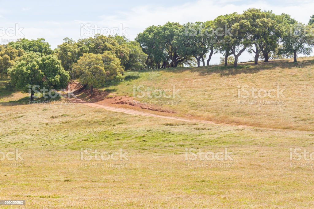 Trail in Cork trees forest and farm field in Santiago do Cacem stock photo