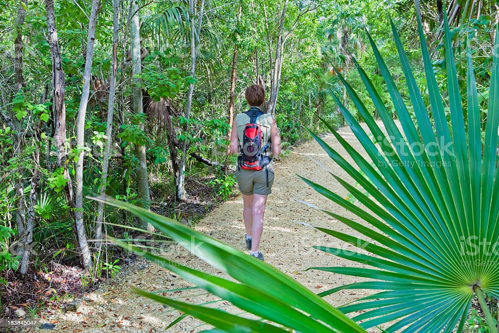 Trail in Queen Elizabeth II Botanic Park, Grand Cayman stock photo
