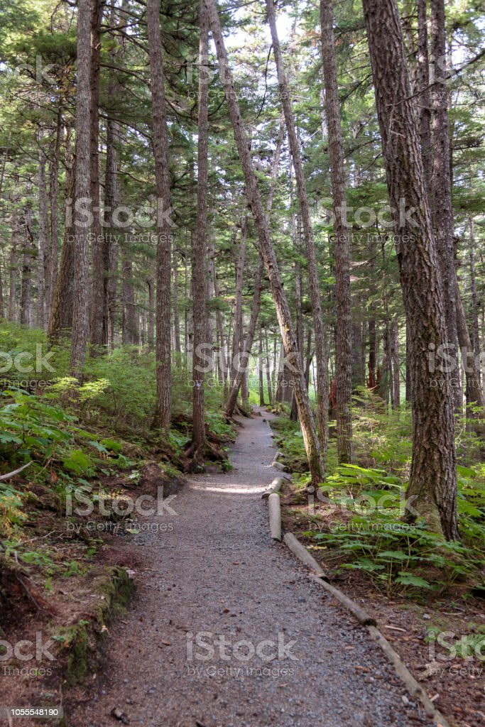 Trail in the forest near Haines Alaska