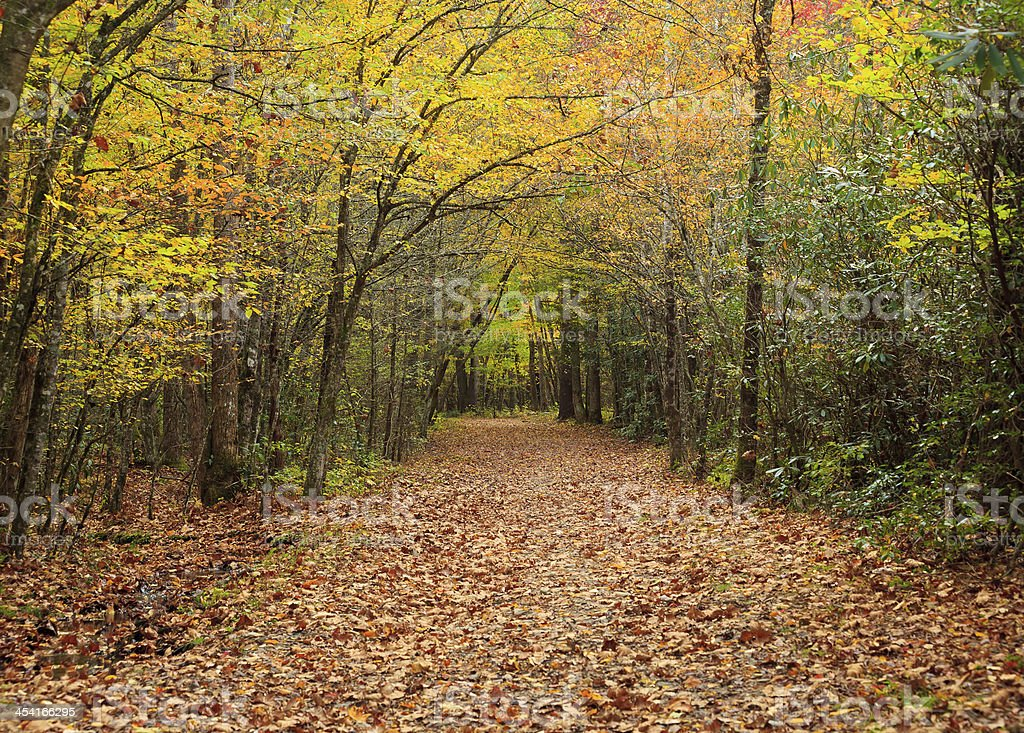 Trail in the Forest royalty-free stock photo