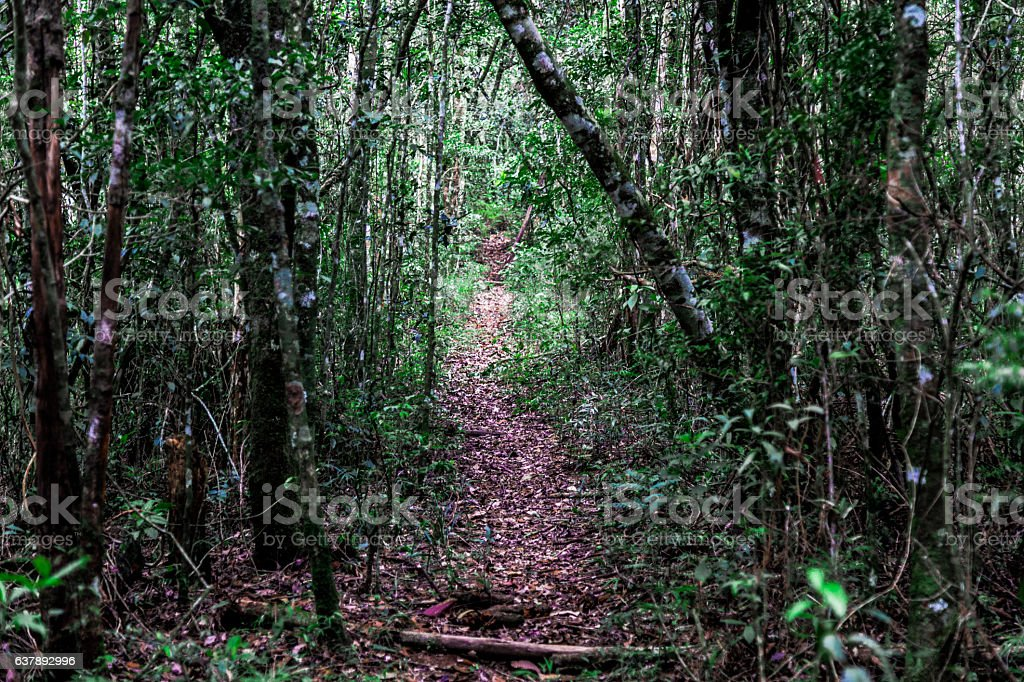 Trail in the middle of the Atlantic Forest stock photo