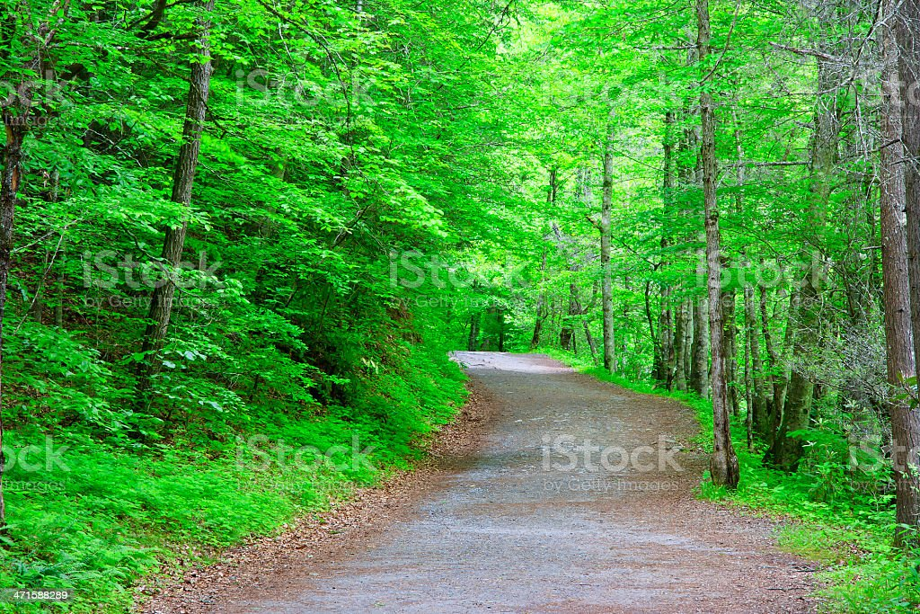 Trail in the Springtime stock photo