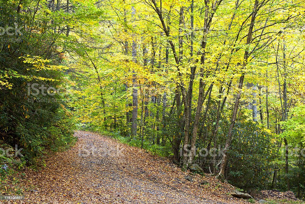 Trail in the Woods stock photo