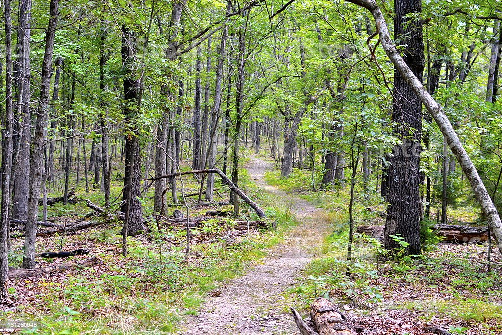 Trail in the woods. stock photo