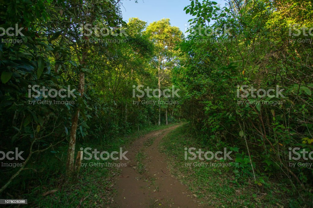 Trail into a green forest stock photo