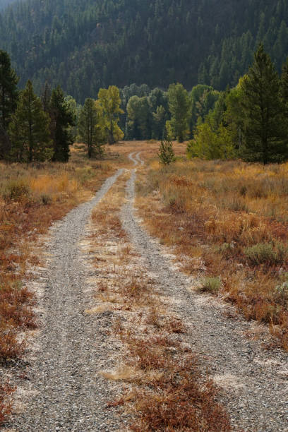 A trail leads into a wooded area. stock photo