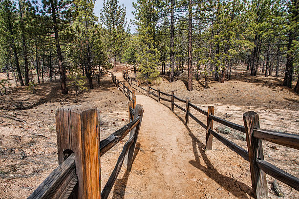 Trail Lined With Split Rail Fence stock photo