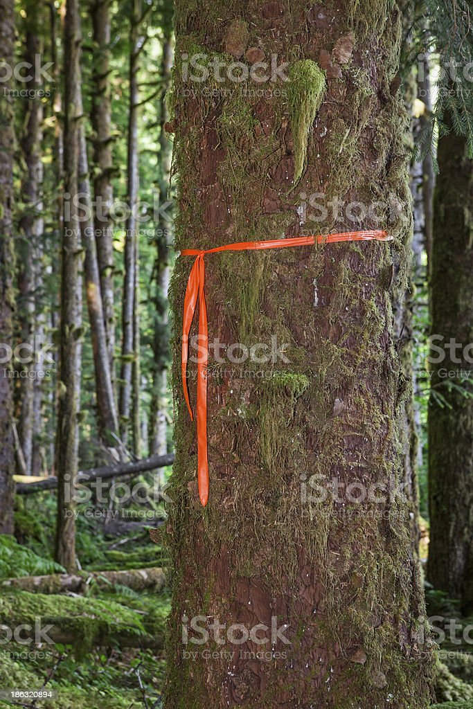 Trail Marker on Tree stock photo