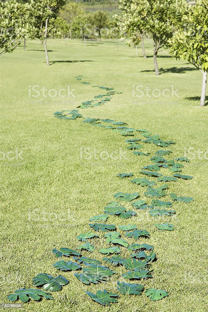 Trail of green leaves through field royalty-free stock photo