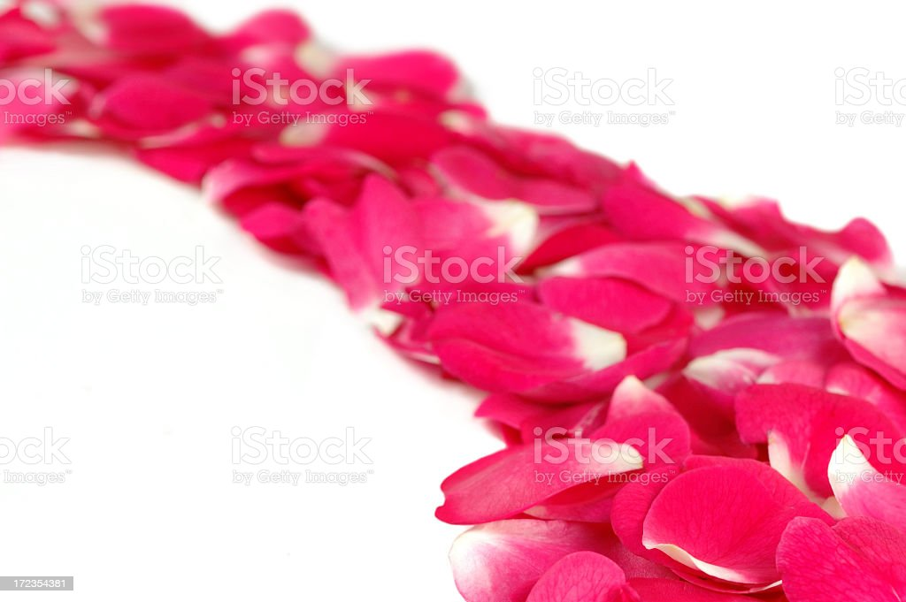 Trail of rose petals royalty-free stock photo