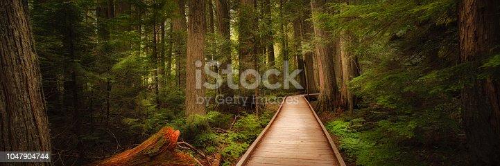 Trail of the Cedars in Glacier National Park, Montana, USA
