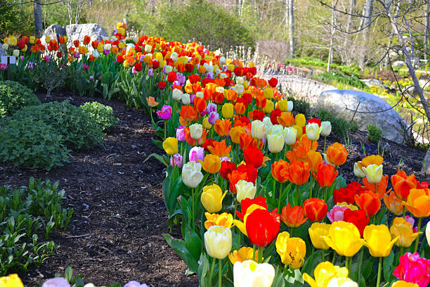 Trail of Tulips – Foto