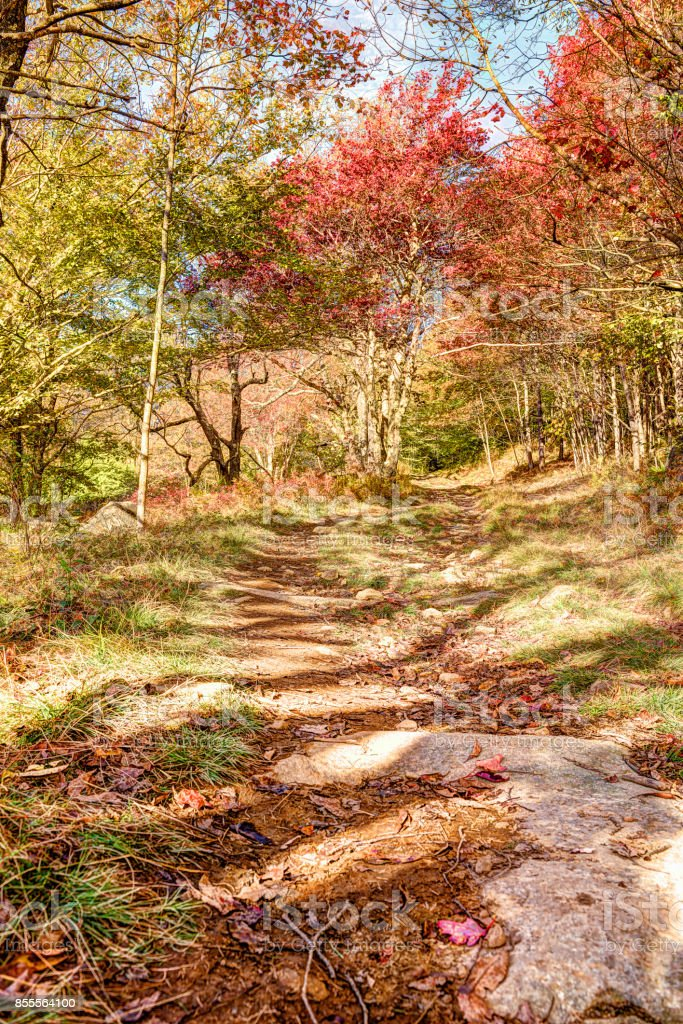 Trail path in autumn forest on hill going up in Dolly Sods, West Virginia stock photo
