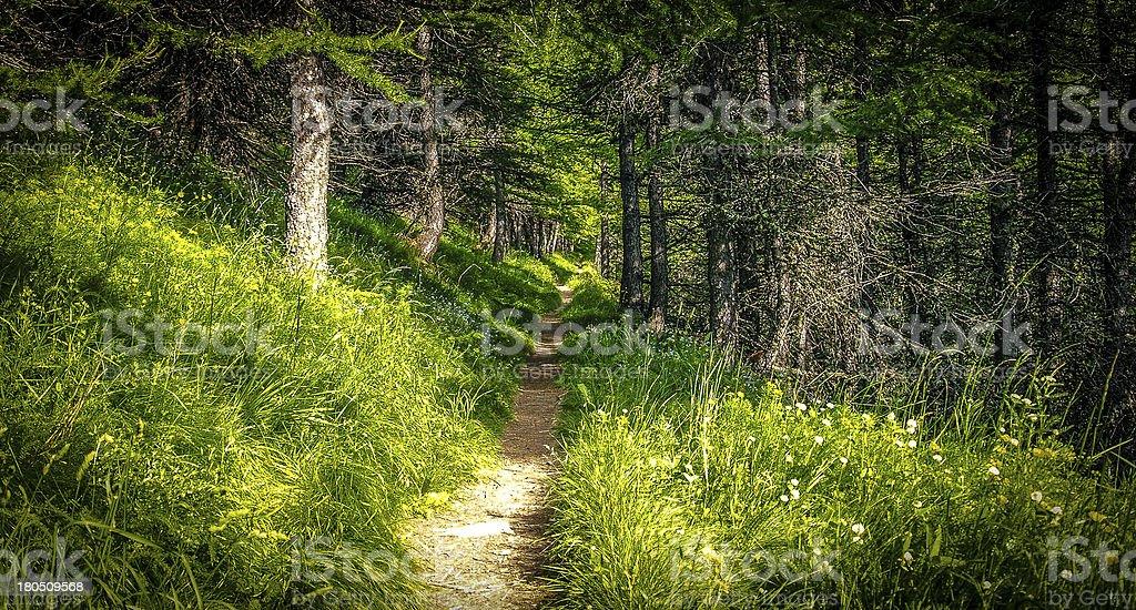 Trail royalty-free stock photo