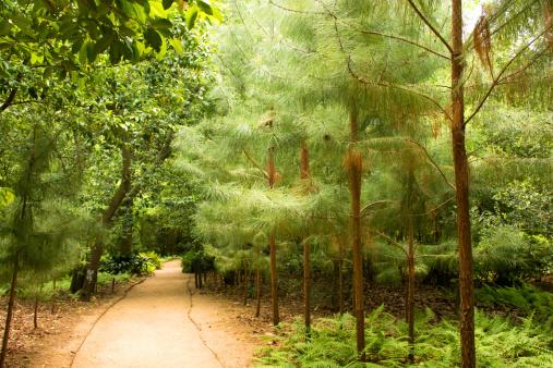 Trail at Bayou Bend Gardens in Houston, Texas