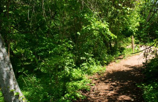 Trail at Memorial Park, Houston, Texas