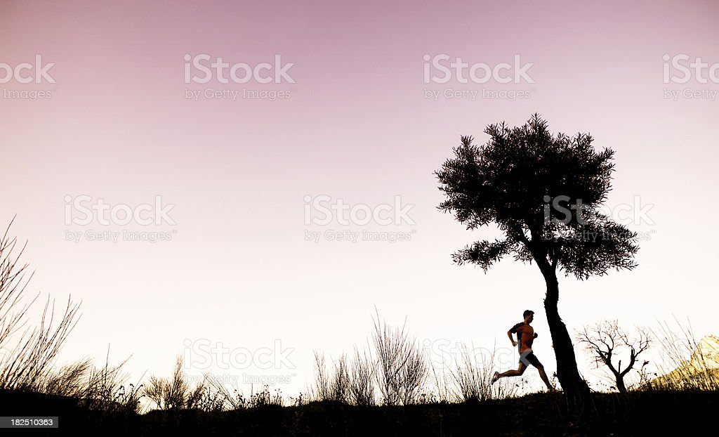 Trail Runner and lone tree at sunset royalty-free stock photo