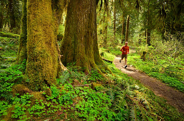 A trail runner running through a forest stock photo