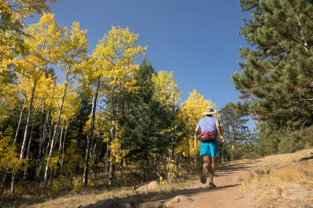 Trail runner with fall yellow aspen Independence Mountain Trail Evergreen Colorado stock photo