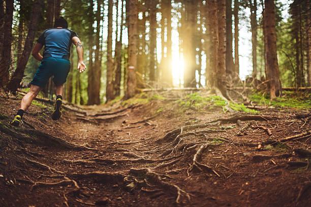sendero corriendo en el bosque - trail running fotografías e imágenes de stock