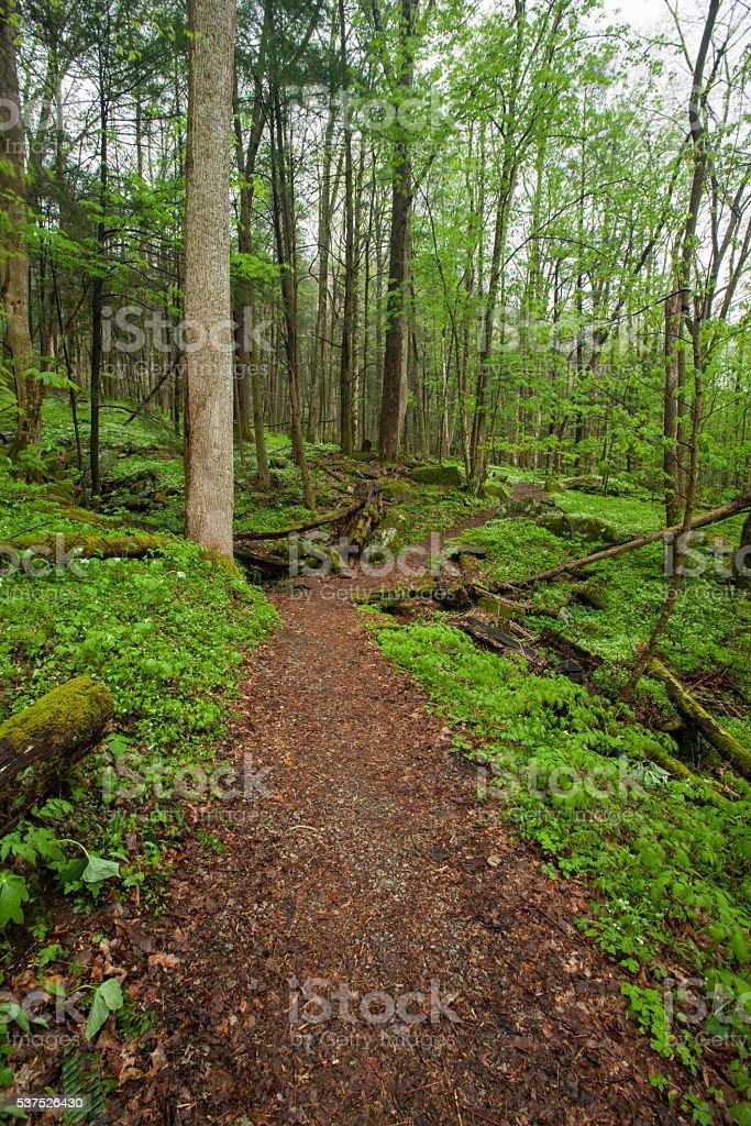 Trail, Spring, Phacelia, Great Smoky Mountains NP, TN stock photo